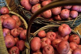 image of solanum tuberosum  - Baskets full of fresh new potatoes locally grown in Florida - JPG