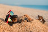 Beautiful Dog Of Dachshund, Black And Tan, Buried In The Sand At The Beach Sea On Summer Vacation Ho poster