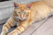 Homeless Tabby Red Cat With Green Eyes Resting At City Street. Striped Orange Wild Kitten Lying On W poster