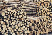 Firewood Background, Preparation Of Firewood For The Winter. Pile Of Firewood. Firewood Texture poster