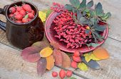A Full Cup Of Rosehip Berries And A Plate Of Barberry Berries On Wooden Planks In Autumn Assorted Le poster