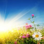 picture of yellow flower  - Flower field on sunny day - JPG