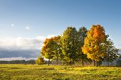 Autumn Landscape Of Colorful Trees On Green Meadow In Park In Clear Warm Evening. Warm Sunlight Fall poster