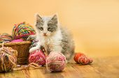 Cute Kitten With A Ball Of Yarn poster