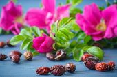 picture of wild-brier  - fruits and flowers of wild rose on a wooden table