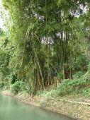 stock photo of martha  - Martha Brae River in Jamaica in the Caribbean - JPG
