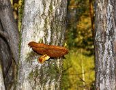 stock photo of toadstools  - mushroom (toadstool) growing on a tree with moss ** Note: Shallow depth of field - JPG