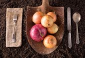 pic of rich soil  - Organic farm to table healthy eating concept on soil background - JPG