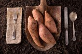 stock photo of rich soil  - Organic farm to table healthy eating concept on soil background - JPG