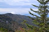 stock photo of hillbilly  - Smokey Mountain Morning with pine tree in early fall - JPG