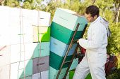 image of bee keeping  - Male beekeeper loading stacked honeycomb crates in truck - JPG