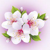 pic of wedding feast  - Blossoming sakura branch - JPG