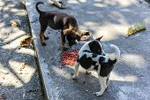picture of stray dog  - Thai Puppy Stray Dog Eating  - JPG