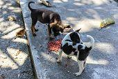 image of stray dog  - Thai Puppy Stray Dog Eating  - JPG