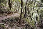 stock photo of himachal pradesh  - Trees in a forest - JPG