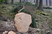 foto of bohemia  - felled trees ready for transportation South Bohemia Czech Republic - JPG