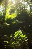 image of rainforest  - Small plant growing in rainforest in the sunshine - JPG