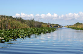 picture of airboat  - Airboat on tropical wetland in Everglades National Park in Florida - JPG