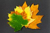 Maple Leaf On Textured Background / Bright Autumn Maple Leaf End Of Summer poster