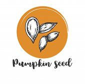 Pumpkin Seed Vintage Hand Drawing Of Seeds Vector Illustration Retro Design poster