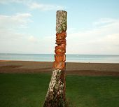 picture of oddities  - an ancient deity of Hawaiian residents carved out of an old palm tree trunk also known as a Tiki God - JPG