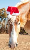 image of horse wearing santa hat  - Santa - JPG