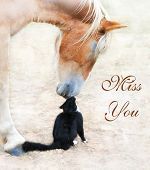 stock photo of gentle giant  - Cat and horse nose to nose with Miss You text - JPG