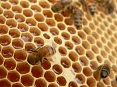 stock photo of bee-hive  - Working bees - JPG