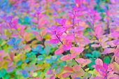 Red And Colorful Leaves Branch Close Up. Autumn Season. Colorful Autumn Leaves. Autumn Foliage Conce poster