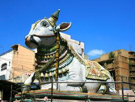 picture of meenakshi  - Nandi near by Sri Meenakshi hindu temple in Madurai - JPG