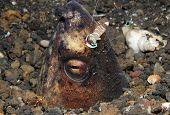 picture of coexist  - Magnificent Partner Shrimp  - JPG
