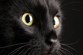 image of puss  - Black cat on black background - JPG