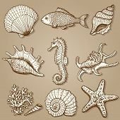 stock photo of aquatic animal  - Sea collection - JPG