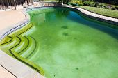 stock photo of stagnation  - Back yard swimming pool behind modern single family home at pool opening with green stagnant algae filled water before cleaning - JPG