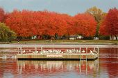 stock photo of flock seagulls  - The Trout Lake swim float in autumn - JPG
