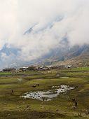 stock photo of feeding horse  - Feeding horses near lake in Nepalese Himalaya - JPG