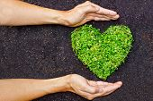 foto of environmentally friendly  - hands holding green heart shaped tree  - JPG