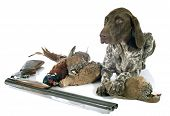 pic of hunt-shotgun  - hunting games and dog in front of white background - JPG