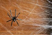 pic of cobweb  - Cobweb with spider on wooden background - JPG