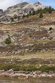 image of behemoth  - Landscape with spanish mastiff dog swimming in a lake - JPG