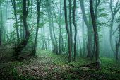 stock photo of morning  - Trail through a mysterious dark forest in fog with green leaves - JPG