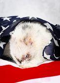 stock photo of ferrets  - Little cute ferret on the USA flag background - JPG