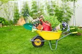 stock photo of wheelbarrow  - Wheelbarrow with Gardening tools in the garden - JPG