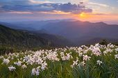 picture of daffodils  - Evening landscape with flowers - JPG