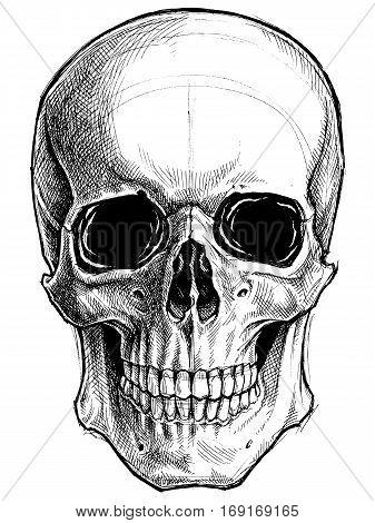 Skull Drawing line