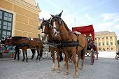 stock photo of hackney  - Horse driven cab at the Schonbrunn Palace in Vienna Austria - JPG