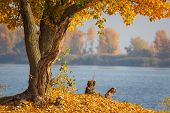 Autumn Forest Lake Landscape. Autumn Forest Lake Water Scene. Golden Autumn Forest Lake View poster