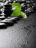 Постер, плакат: базальтовые камни и зеленые листья после дождя