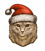 Cat, Kitty In A Christmas Hat. Sketch Vintage Vector Illustration poster