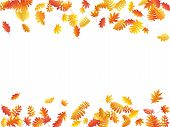 Oak, Maple, Wild Ash Rowan Leaves Vector, Autumn Foliage On White Background. Red Orange Gold Rowan  poster